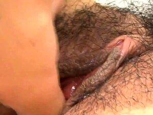 Fighe Pelose
